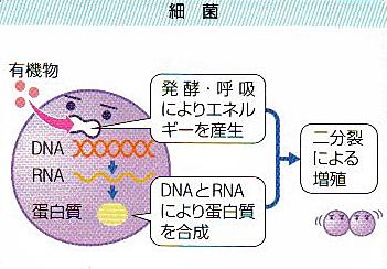 炎 ウイルス 性 胃腸